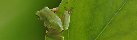 frog_sml